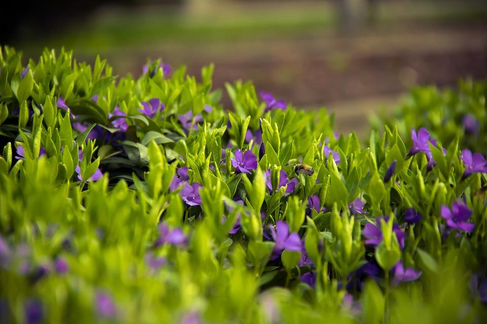 Flowers Grass Meadow 183 Free Photo On Pixabay