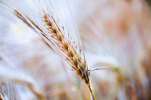 Мировой баланс пшеницы в февральском отчете USDA разочаровал участников зернового рынка