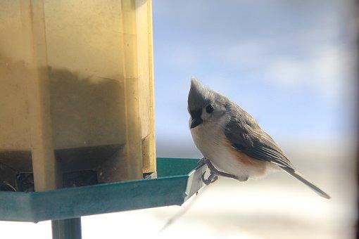 Bird, Feeding, Animal, Cute, Eating