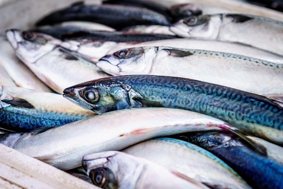 Fisch, Frisch, Markt, Lebensmittel, Meeresfrüchte