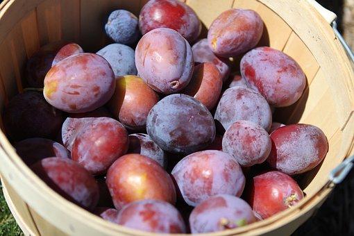 Prune, Black, Juicy, Sticky, Fruit, Plum, Dried, Ten Random Facts. Food, Angas Park