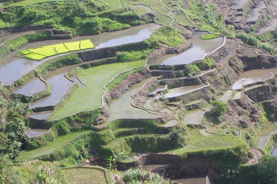 Terrazas Cultivo De Arroz Campos Foto Gratis En Pixabay