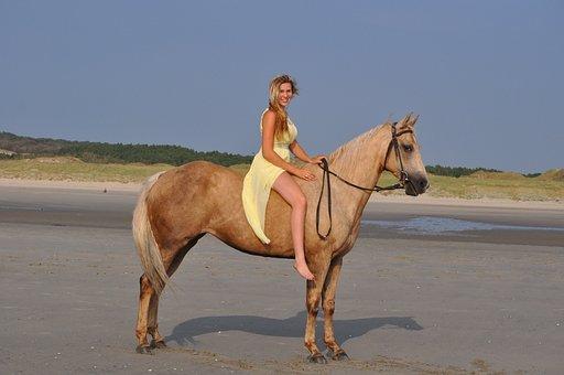 horse-934555__340.jpg