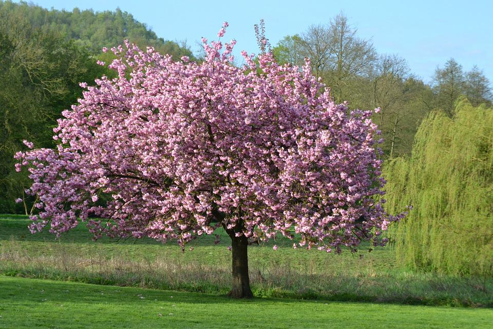 Boom Met Bloemen.Boom Natuur Landschap Gratis Foto Op Pixabay