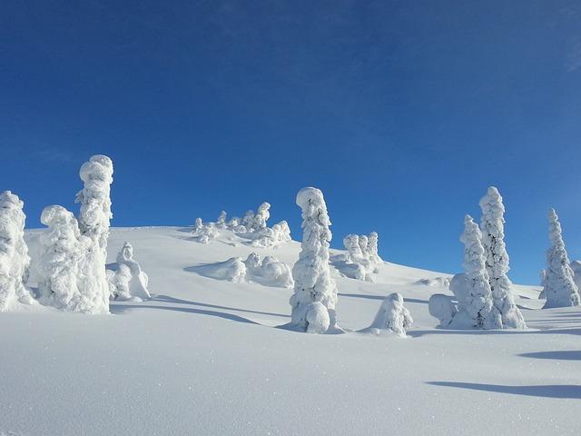 Free Photo Winter Snow Trees Norway Free Image On