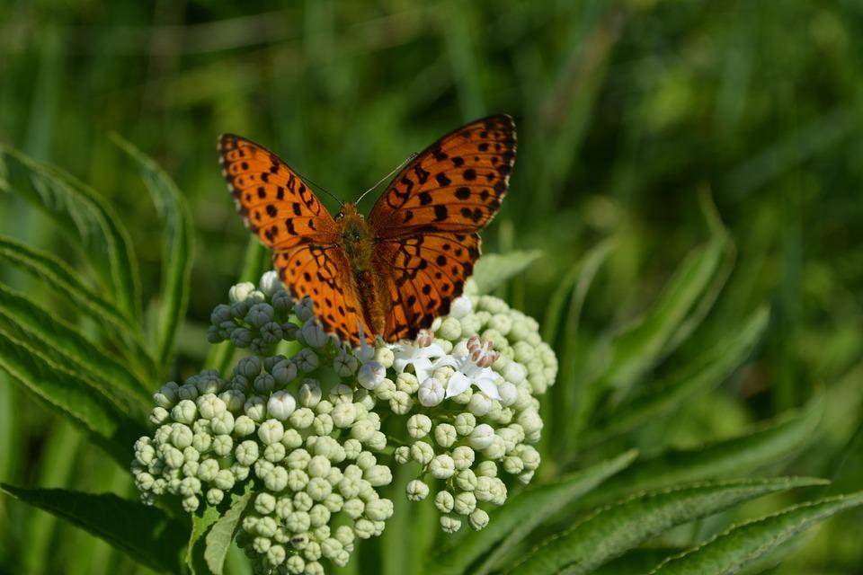 Kelebek çiçek Boyama Pixabayde ücretsiz Fotoğraf