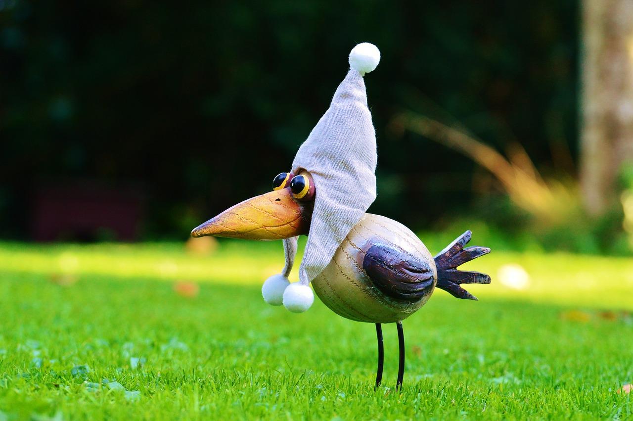 прекрасно смешные птички фото желаете