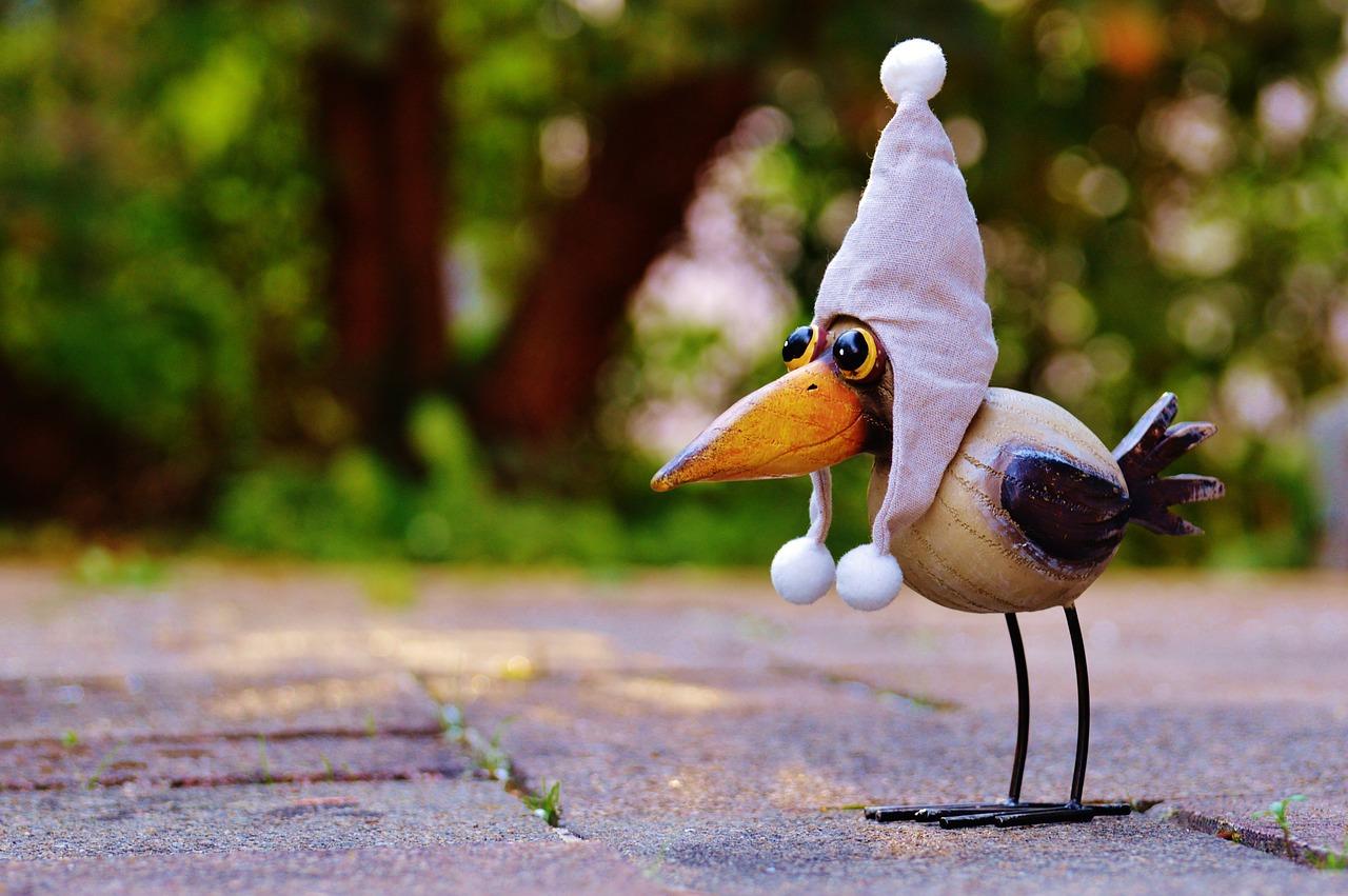 смешные птички фото надеемся