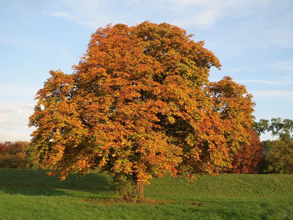photo gratuite arbre automne orange image gratuite sur pixabay 937457. Black Bedroom Furniture Sets. Home Design Ideas