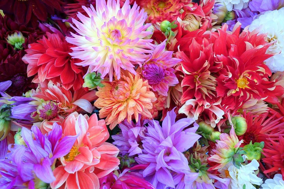 Populair Bloemen Dahlia Achtergrond · Gratis foto op Pixabay @YI29
