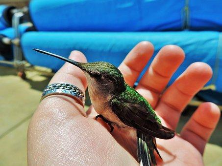 Beija Flor, Pássaro, Natureza, Voar