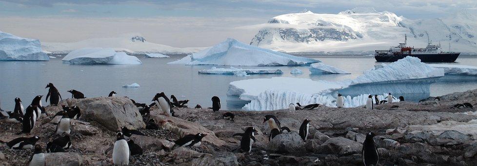 Antarctica, Penguins, Animals, Tourism