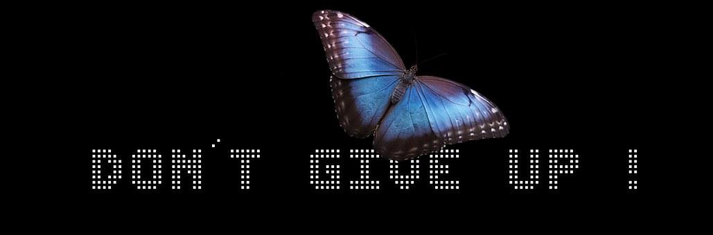 Banner, Header, Butterfly, Development