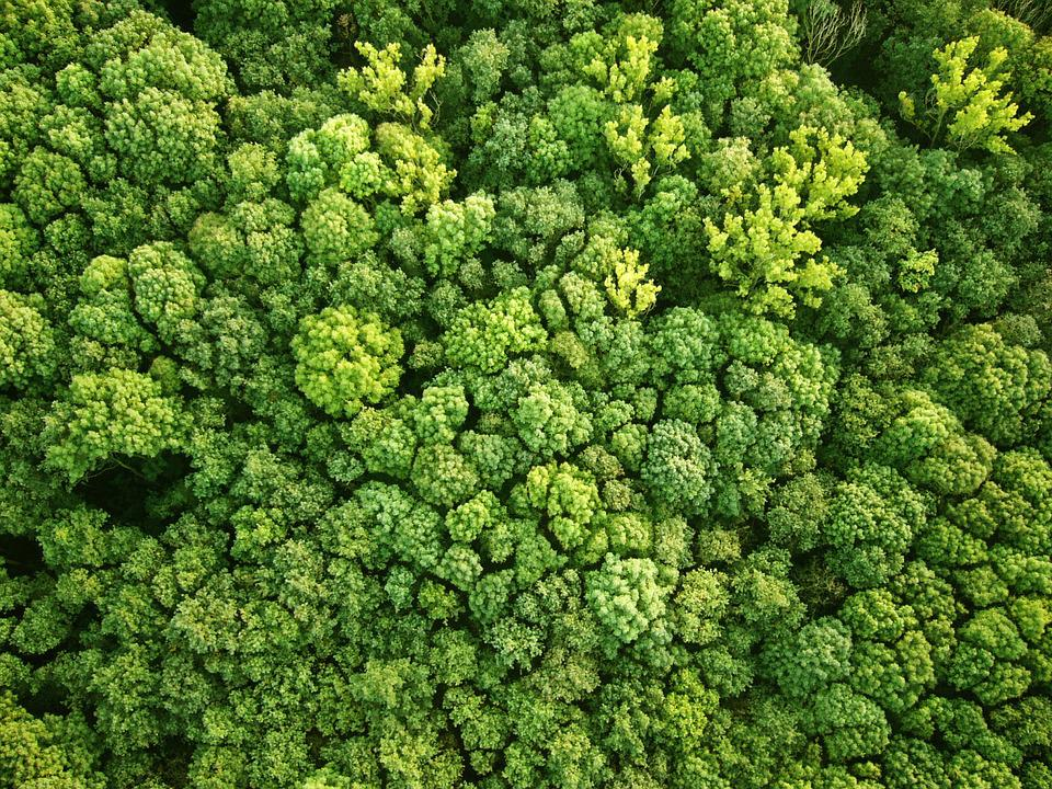Free Photo Bird S Eye View Forest Free Image On