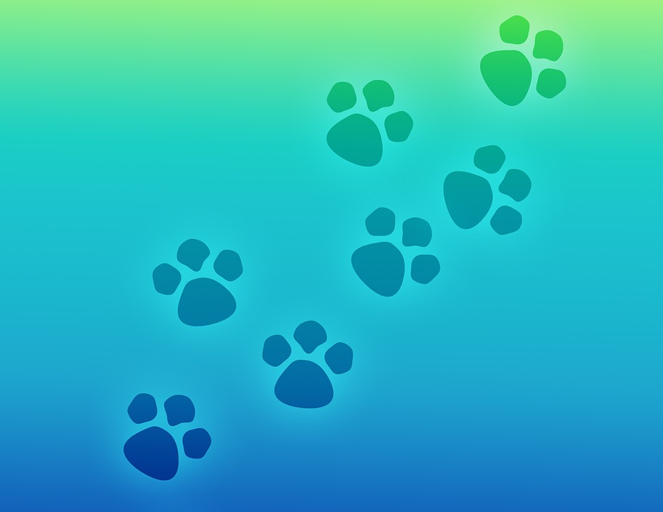 Paw Print, Paws, Prints, Pet, Dog