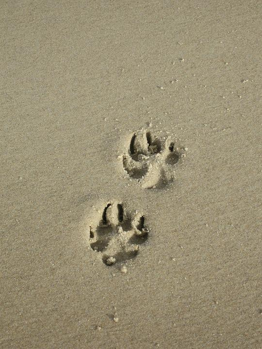 f2d1d88b5 Sand Paw Print - Free photo on Pixabay