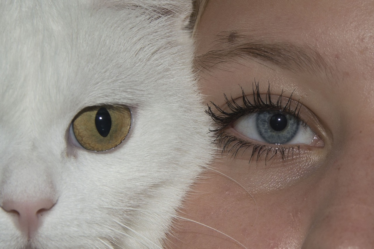 картинка глаз человека и кота