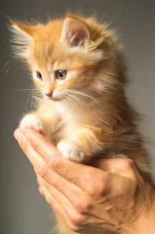 Kätzchen, Niedlich, Katze, Tier