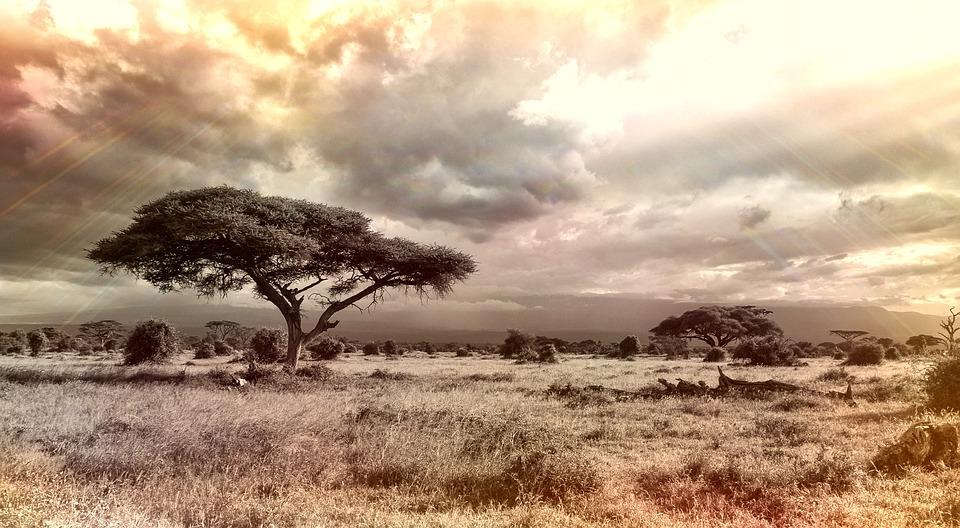 Afryka, Sawanny, Park Narodowy, Drzewo, Charakter