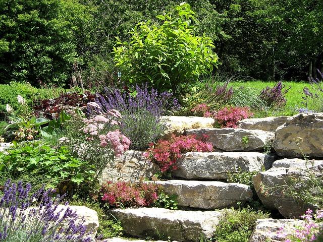 kostenloses foto natur steingarten pflanzen kostenloses bild auf pixabay 946004. Black Bedroom Furniture Sets. Home Design Ideas