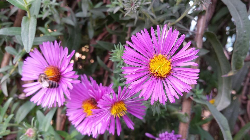 Fleurs Septembre Bouquet · Photo gratuite sur Pixabay