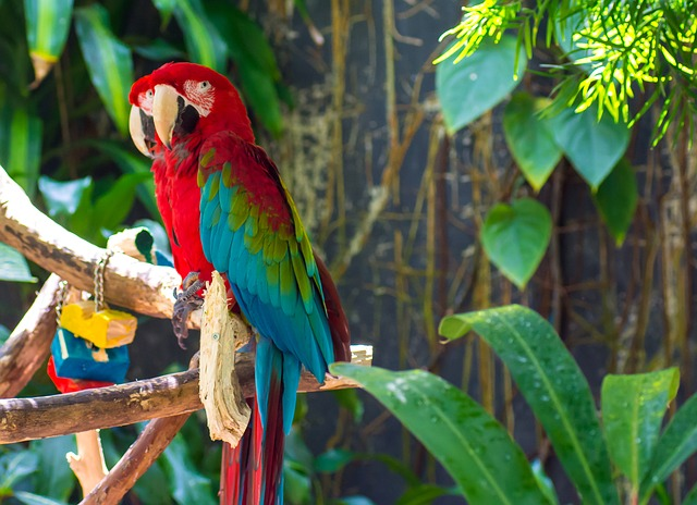 Free Photo Parrots Bird Animal Macaw Free Image On