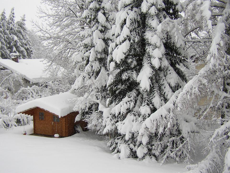 Winter, Schnee, Kalt, Garten, Weiß, Hell, Winterwald