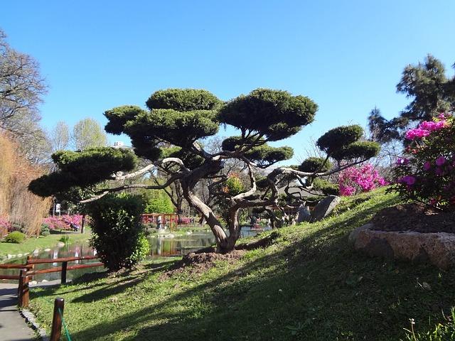 Photo gratuite arbre japonais jardin japonais image - Arbre pour jardin japonais ...