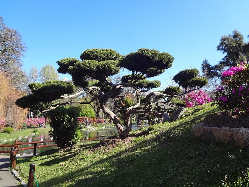 Photo gratuite arbre japonais jardin japonais image gratuite sur pixabay 949197 - Arbre pour jardin japonais ...