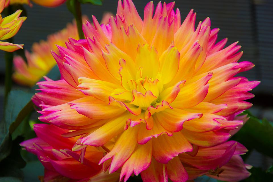 Flower color flowers free photo on pixabay flower color flowers yellow pink mightylinksfo Gallery