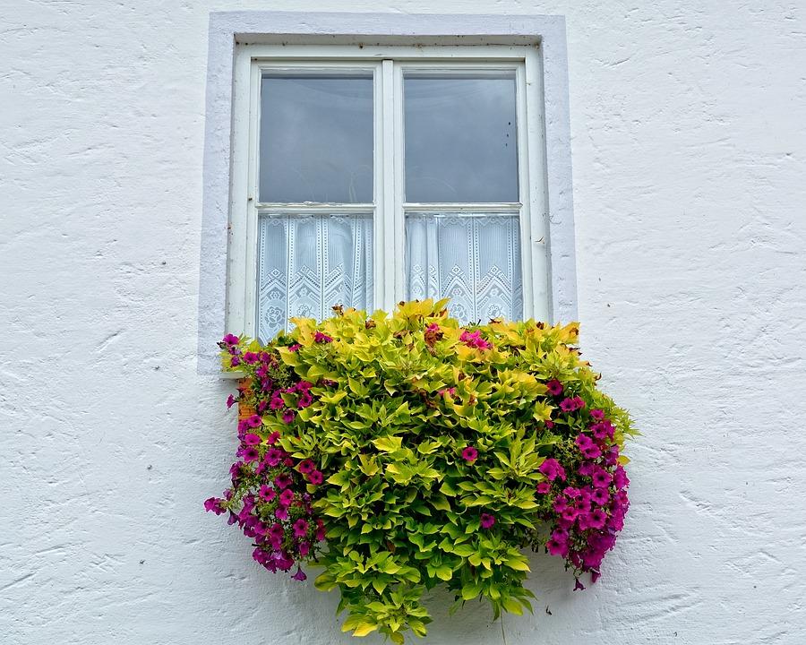 Fenster Blumen Blumenkasten Kostenloses Foto Auf Pixabay