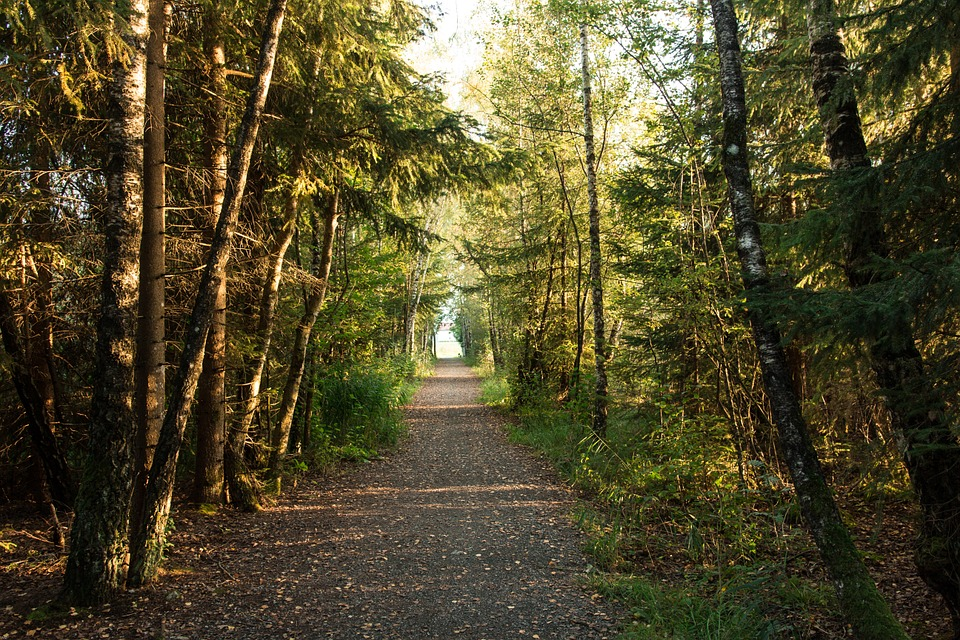 Free photo: Forest, Forest Path, Evening Light - Free Image on Pixabay ...