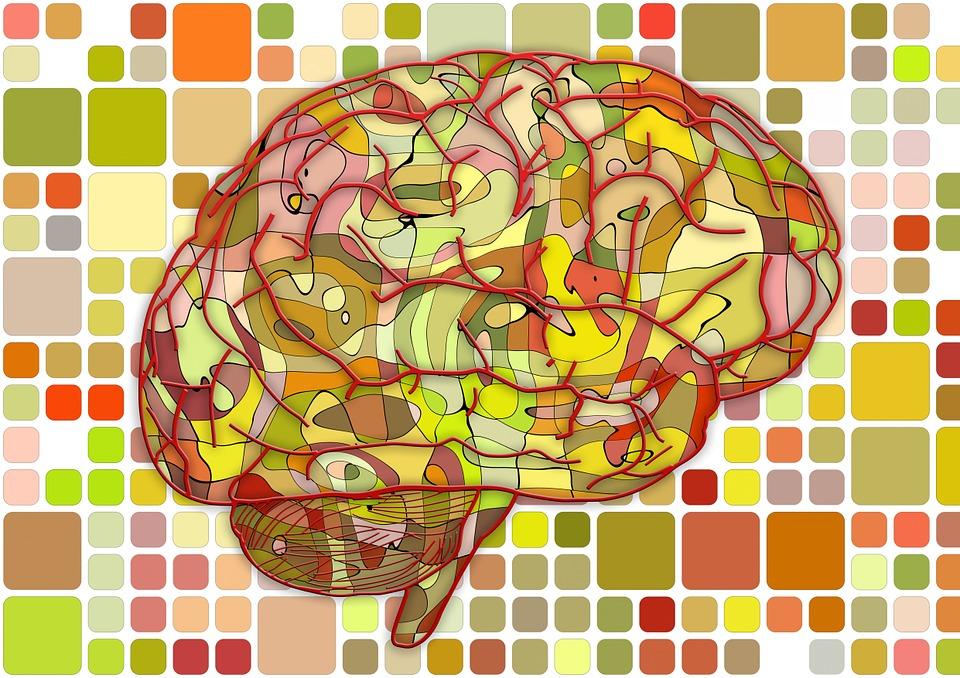 Cerebro Biología Resumen · Imagen gratis en Pixabay