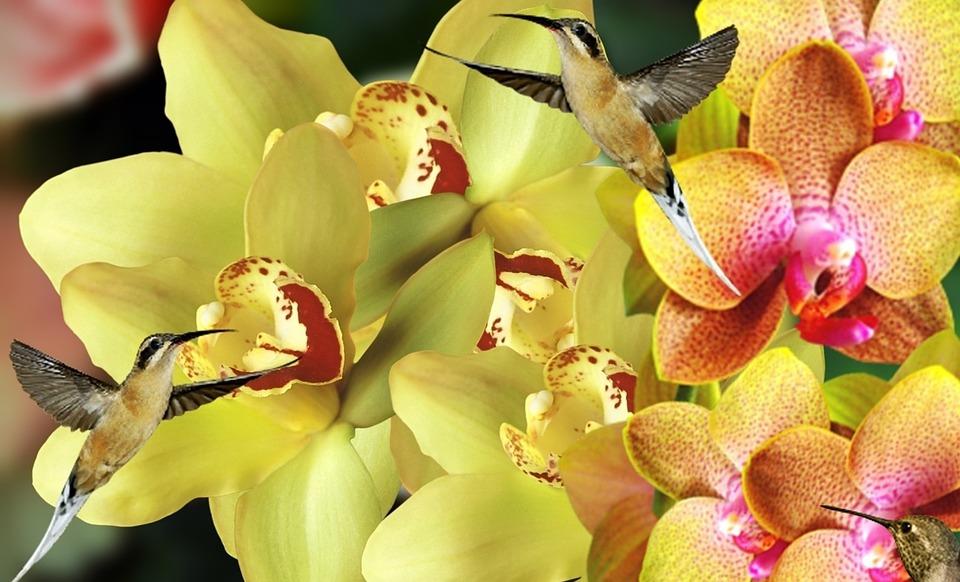 orquideas flores jardín foto gratis en pixabay
