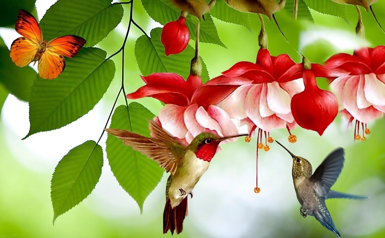 Картинки птицы бабочки, картинки