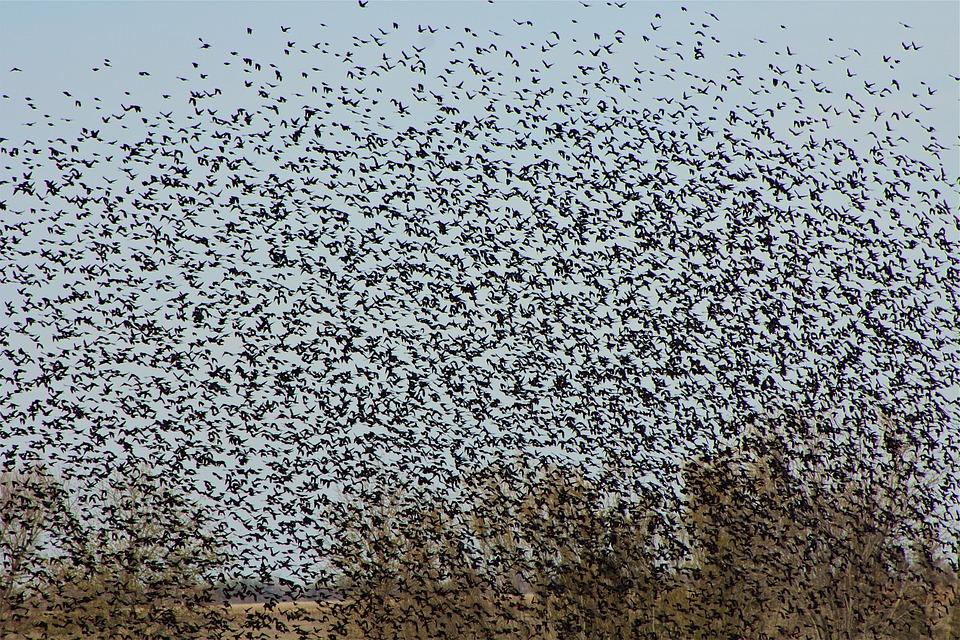 скачать игру Flock - фото 11
