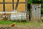 chickens, farm, agriculture