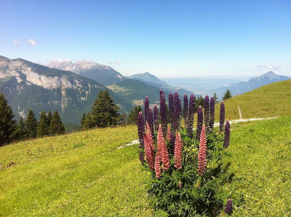 Fleurs montagne haute savoie - Fleurs de montagne alpes ...