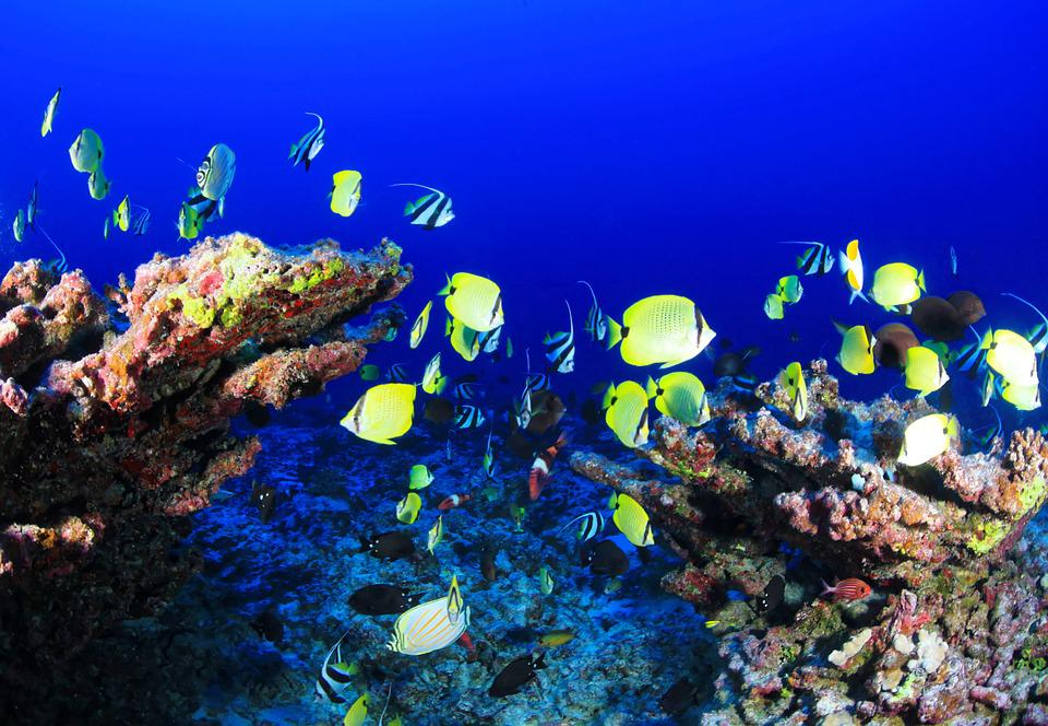 サンゴ礁, ディープリーフ, 魚, 海洋, 水中, コーラル, 青, 海, リーフ, 自然, マリン