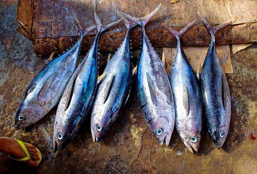 Испания: Власти увеличили квоту на вылов голубого тунца на Канарских островах