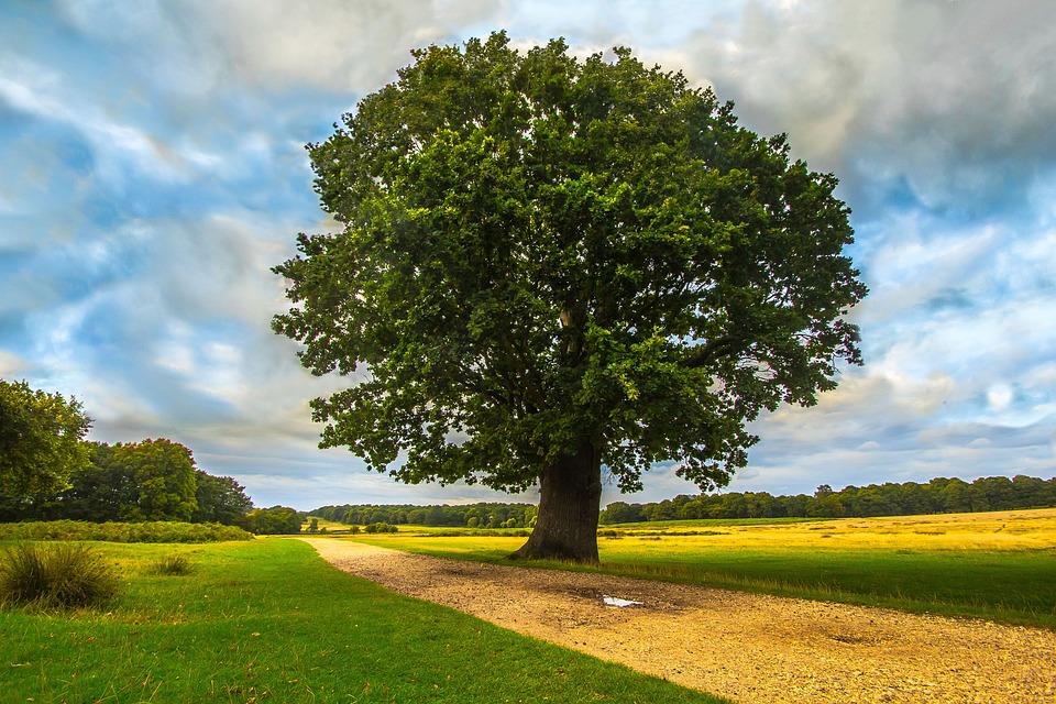 網誌: 樹