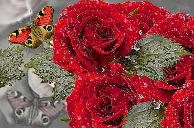 kostenlose illustration rote rose rote rosen. Black Bedroom Furniture Sets. Home Design Ideas