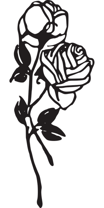 Rosen Blumen Knospen 183 Kostenlose Vektorgrafik Auf Pixabay
