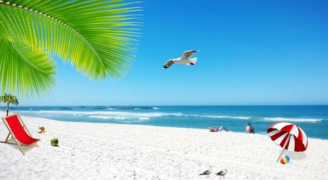 sky blue nature coconut  u00b7 free image on pixabay