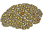 brain, mind, emotions