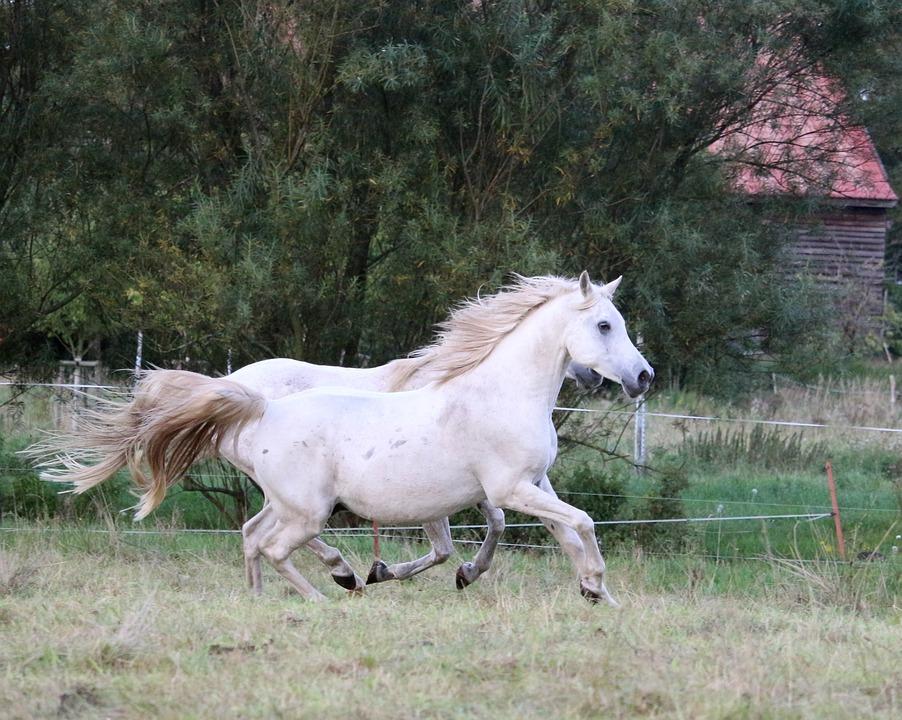 Horse, Gallop, Mold, Thoroughbred Arabian, Sleipnir