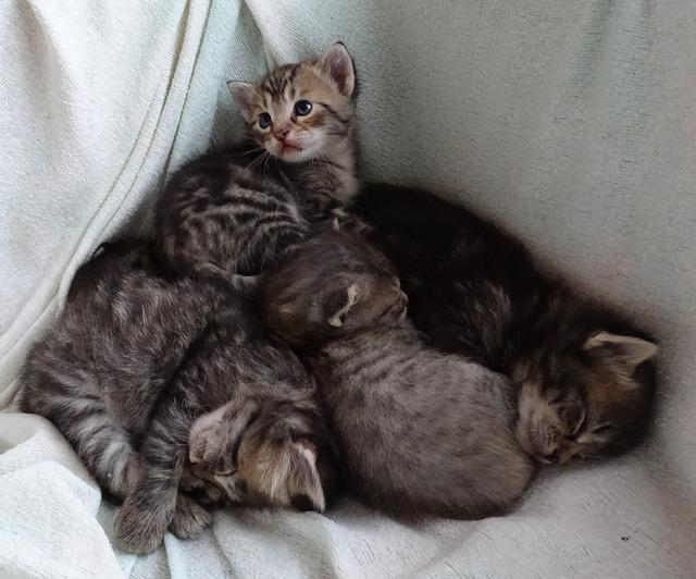 Places Where You Can Get Baby Cats