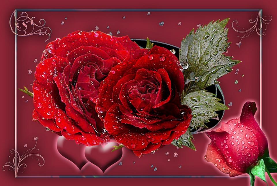 gratis illustration r da rosor rosenknopp hj rtan   gratis bild p pixabay   955936