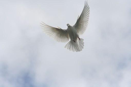 Pájaros Volando Imágenes Pixabay Descarga Imágenes Gratis