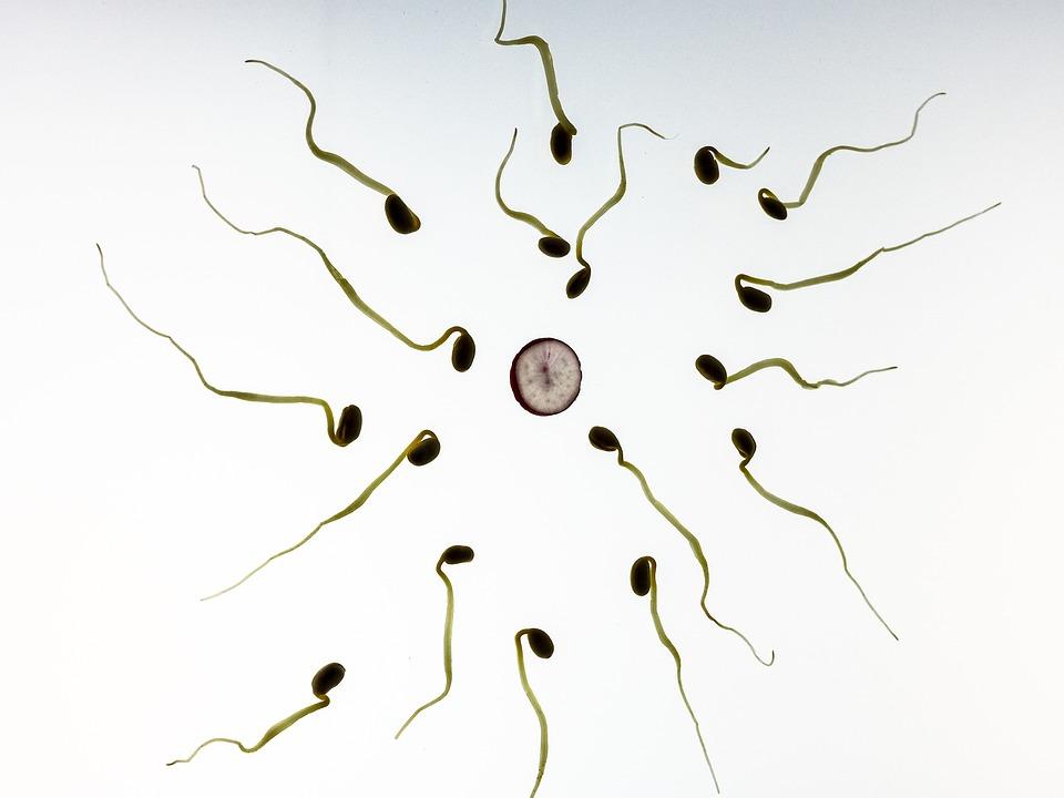 sperme jaune et douleur testicule